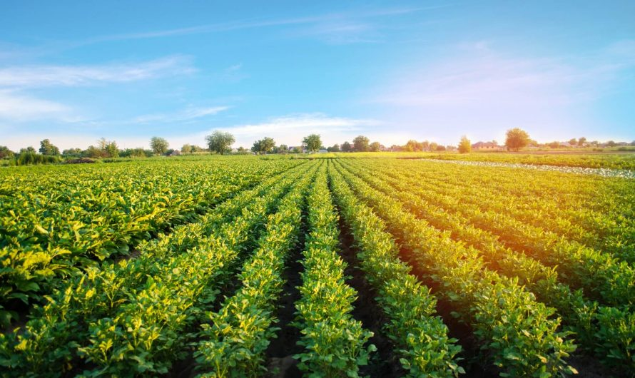 Small Farming Businesses You Can Start